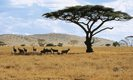Hotels in Kenia