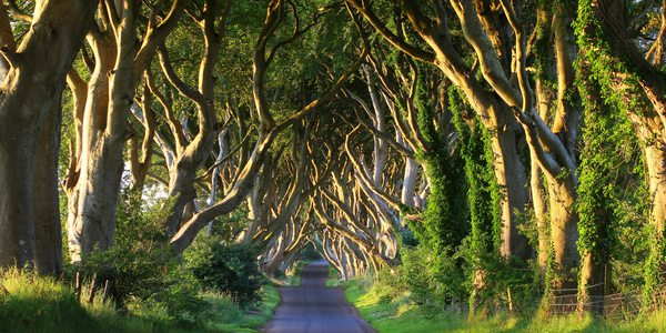 Dark Hedges Nordirland